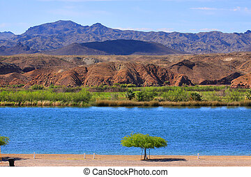 Single tree by lake - Scenic landscape at Lake Havasu city ...