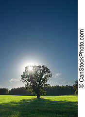 Single tree, greenfield and forest with perfect skyline. -...