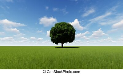 Single Tree Growing Time lapse with wind