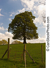 Single tree in a field with fence on sunny spring day