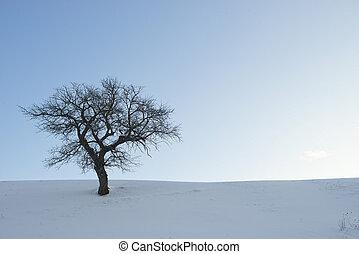 Single tree in a winter landscape