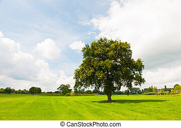 Single tree in green meadows