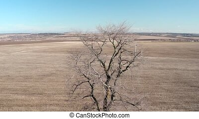 Single tree in the field, aerial view