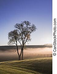 Single Tree in the Fog of Kentucky
