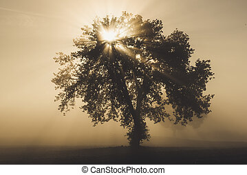 Single tree in the fog
