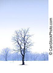 Single tree in the middle of snow