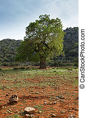 Single tree in the valley