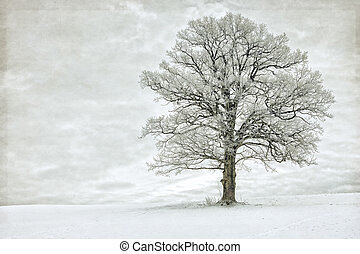 Single tree in winter covered with hoarfrost