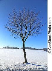 Single tree in winter landscape