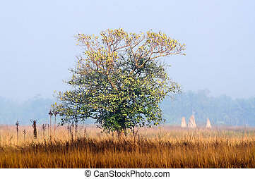 Single tree in winter morning