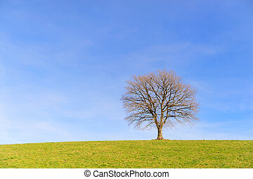 Single tree in winter sun