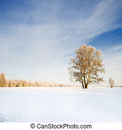 Single tree in winter weather
