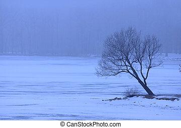 Single tree in winter weather by the frozen lake