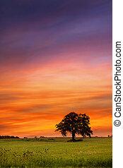 Single tree on a meadow