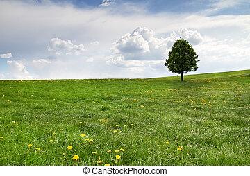 Single tree on a spring meadow