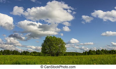 Single tree on a summer meadow - 4k video of single tree on...