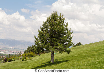 Single Tree on Hill