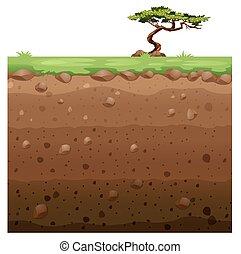 Single tree on surface and underground scene