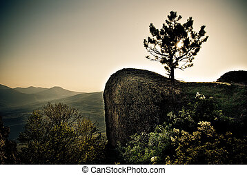 single tree silhouette in the mountain