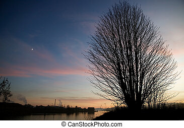 Single Tree - A single tree on a hill near the ocean at...
