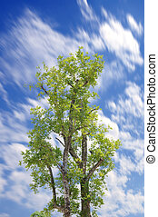 Single tree with blue sky and motion cloud.