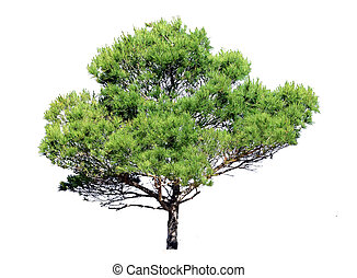 Single tree with green leaves
