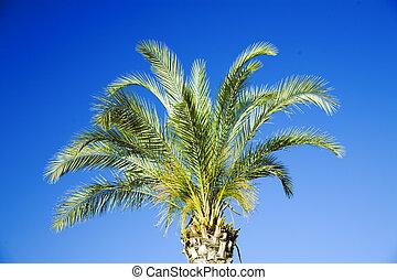 single tropical palm on a background clear blue sky