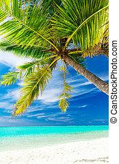 Single vibrant coconut palm tree on a tropical beach