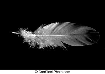 Single white feather (1)
