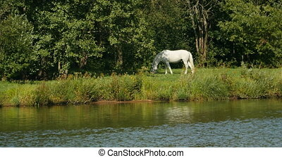 single white horse grazing in a beautiful woods