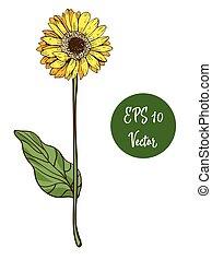 Single yellow daisy flower vector illustration, beautiful...