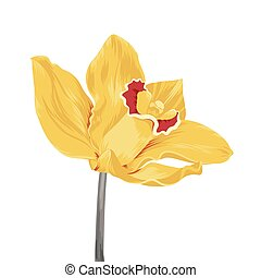 yellow orchid - single yellow orchid flower isolated on...