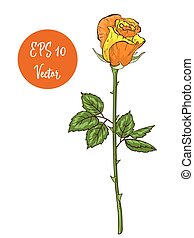 Single yellow rose flower vector illustration, beautiful Valentine rose on long stem isolated on white background.