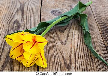 Single yellow tulip on wooden background