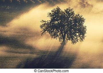 singolo, albero, in, il, nebbia