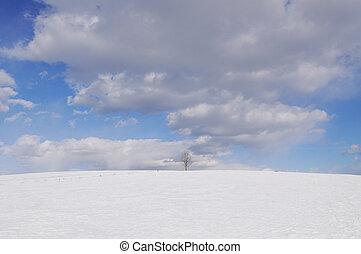 singolo, albero nudo, su, inverno, giorno