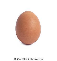 singolo, marrone, uovo pollo, isolato, bianco