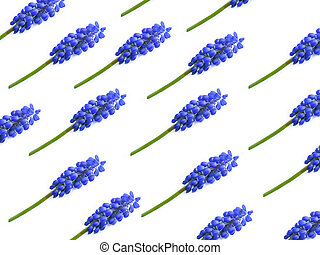 sino, fundo, isolado, flor, branca