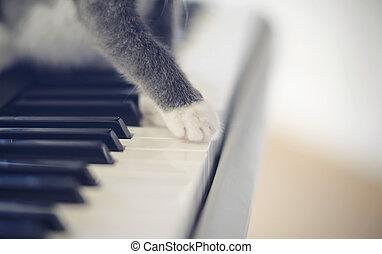 sintetizzatore, gatto, paws, keys.