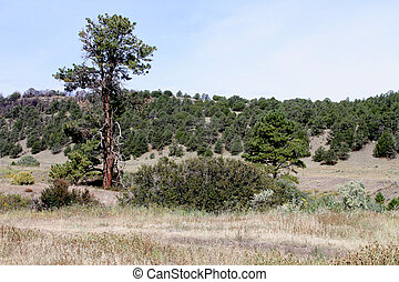 Sipe Wildlife Area, Eagar, Arizona