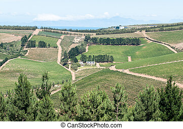 View of a wine farm near Sir Lowrys Pass