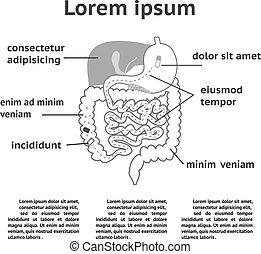 sistema, human, ilustração, digestivo