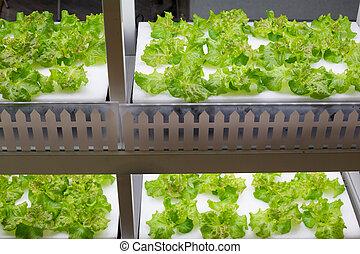 sistema, hydroponics