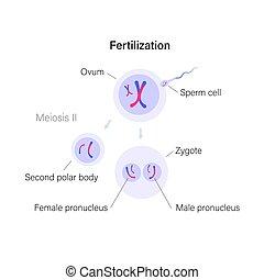 sistema, reproductor, concepto