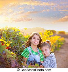 sister kid girls farmer in vineyard harvest in Mediterranean autu