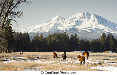 Horses graze near the base of Three Sisters in Oregon State