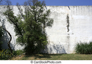 sitges wall - shrubbery growing by a whitewashed wall in...
