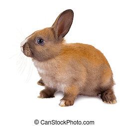 Sitting baby rabbit