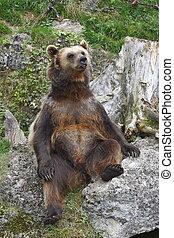 Sitting bear - Austria one happy bear sitting on the rock