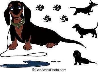 sitting dachshund - funny dachshund sitting shorthair. She...